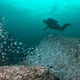Dominio de la Flotabilidad - Buceo Algarrobo