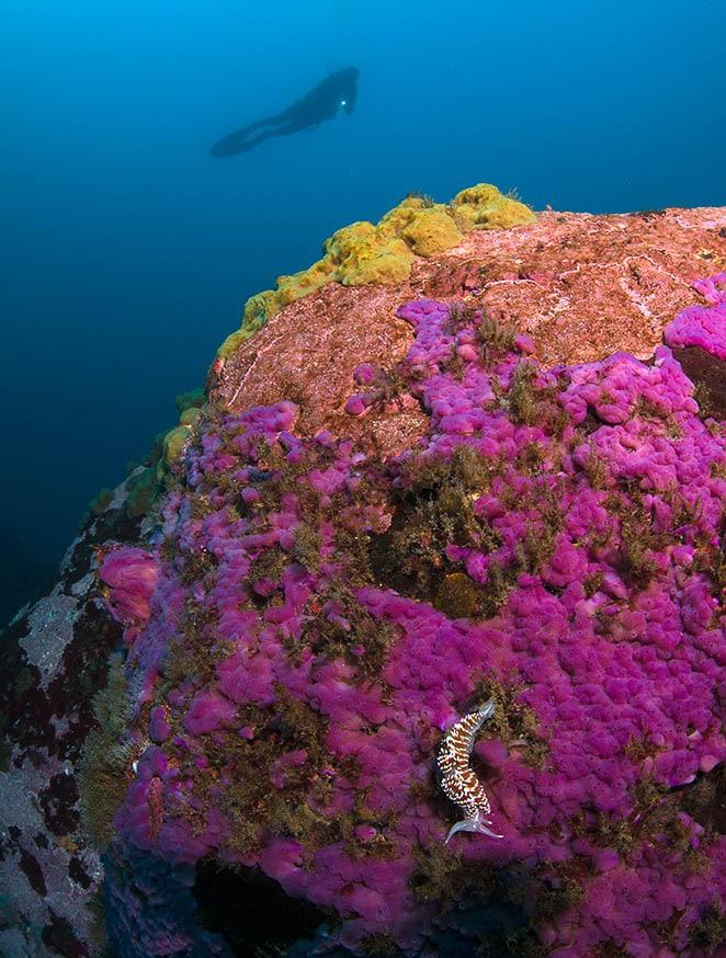 buceo con nitrox y vida marina
